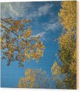 Hanging Aspen Wood Print