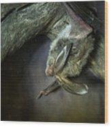 Hanging Big Eared Bat Wood Print