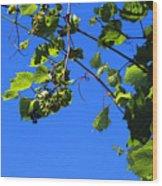 Hanging Grapes Wood Print
