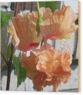 Hanging Hibiscus Wood Print