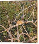Hanging Iguana Wood Print