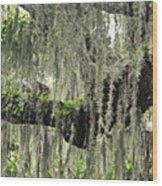 Hanging Moss Wood Print