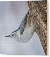 Hanging Nuthatch Wood Print