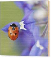 Hanging On A Petal Wood Print