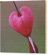 ...hanging On Wood Print