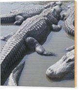 Hanging Out - Alligators North Myrtle Beach Wood Print