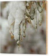 Hanging Snow Wood Print