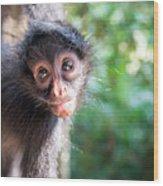 Hanging Spider Monkey Wood Print