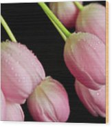 Hanging Tulips Wood Print by Tracy Hall