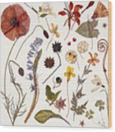 Hannah's Poppy Wood Print