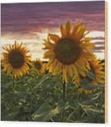Happiness Is A Field Of Sunflowers Wood Print