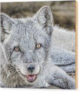 Happy Arctic Fox Wood Print