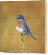 Happy Blue Bird Wood Print