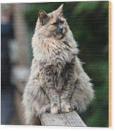 Happy Cat Wood Print