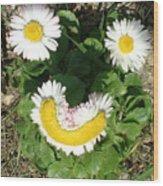 Happy Daisey Wood Print
