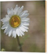 Happy Daisy In The Sun Wood Print