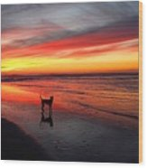 Happy Dog At Sunset Wood Print