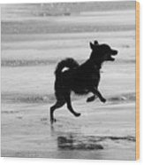 Happy Dog Black And White Wood Print
