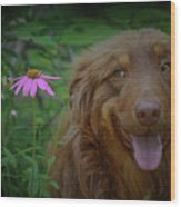 Happy Dog Days Wood Print