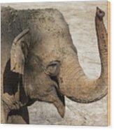 Happy Elephant Wood Print