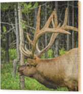Happy Elk Wood Print