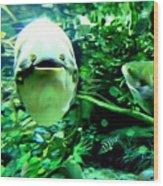 Happy Fish Wood Print