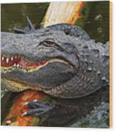 Happy Gator Wood Print