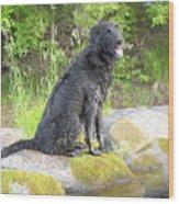 Happy Happy Dog At Dawn Wood Print