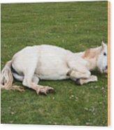 Happy Horse Wood Print