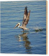 Happy Landing Pelican Wood Print