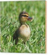Happy Lil Duck Wood Print