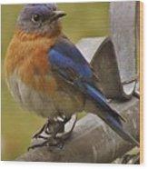 Happy New Year Male Bluebird Wood Print