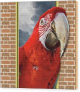 Happy Red Parrot Wood Print