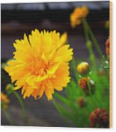 Happy Spring Flower Wood Print
