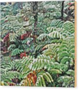 Hapu'u Fern Rainforest Wood Print