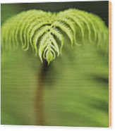 Hapuu Fern Wood Print