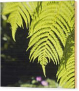 Hapuu Ferns Wood Print