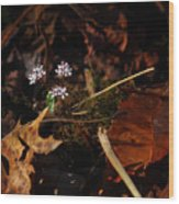 Harbinger Of Spring In Lost Valley Wood Print