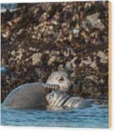 Harbor Seal And Pup Wood Print