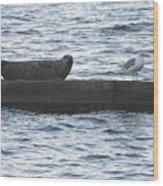 Harbor Seal Hangin With A Friend Wood Print