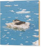 Harbor Seals On Clouds Of Ice Wood Print
