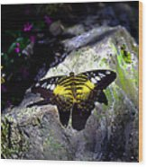 Hard Landing--clipper Butterfly Wood Print
