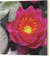 Hardy  Day Water Lily Wood Print