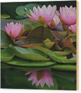 Hardy Pink Water Lilies Wood Print