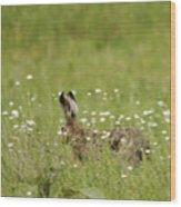 Hare On The Run Wood Print