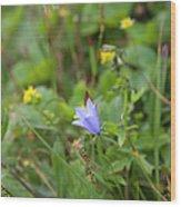 Harebell - Campanula Rotundifolia - Flower Wood Print