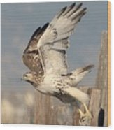 Harlans Hawk Launch Wood Print