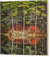 Harold Parker State Park In The Fall Wood Print