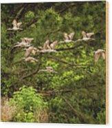 Harris Neck Ibis In Flight Wood Print