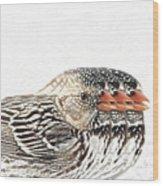Harris' Sparrow X 3 Wood Print